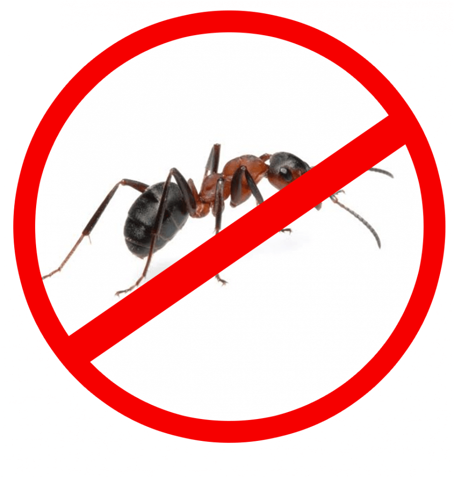Уничтожение муравьев в СПб