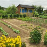 Vegetable garden in front of the cottage.